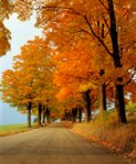 FALL_Autumn road