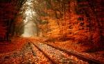 a railway-autumn
